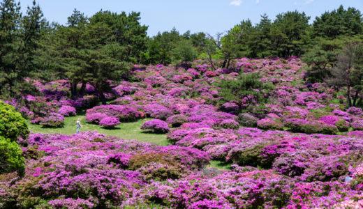 万年山のミヤマキリシマはやっぱりすごかった!2020年のお花畑も素敵な自然美を演出